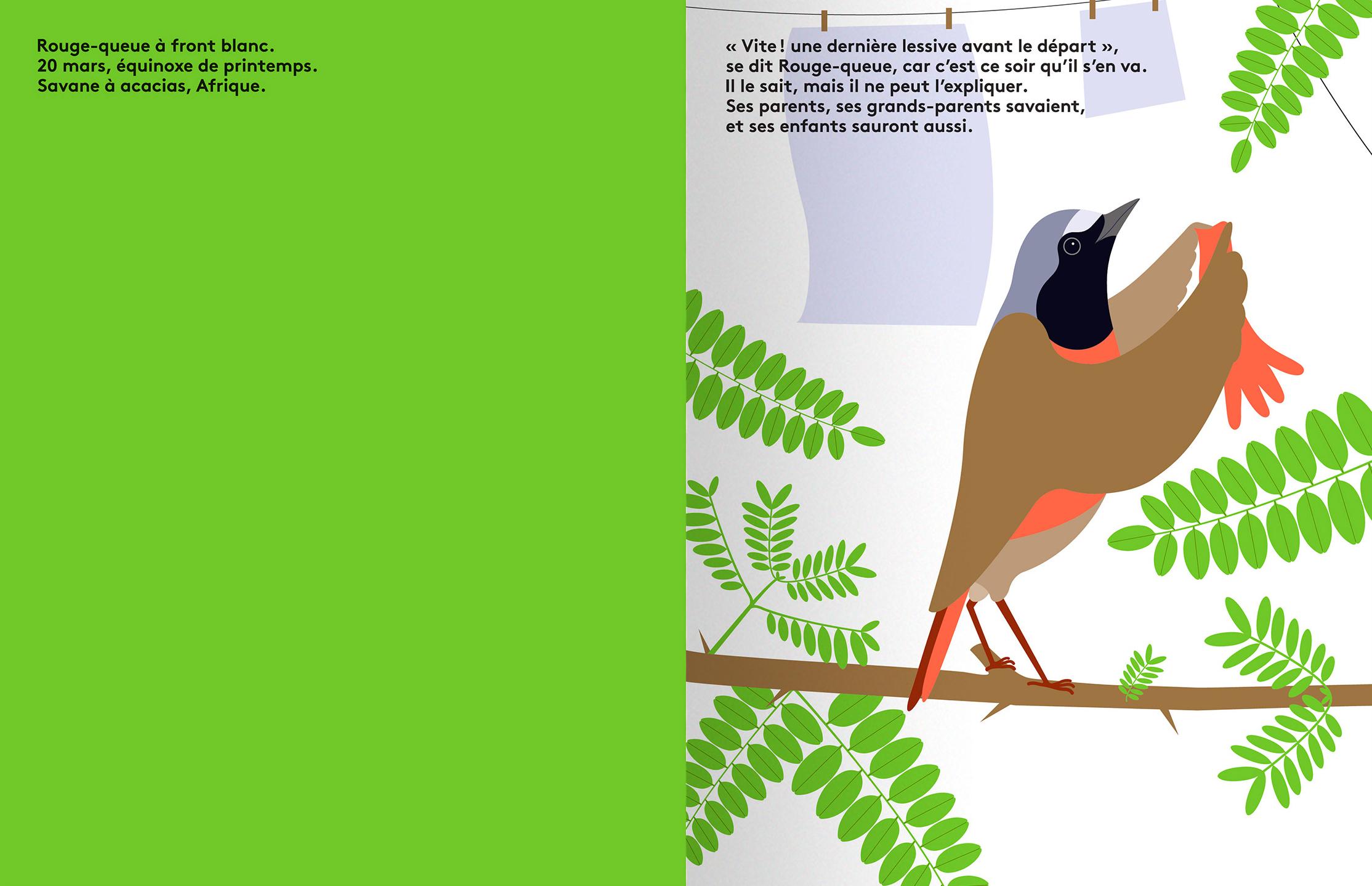 Rouge Queue Quatre Histoires D Oiseaux